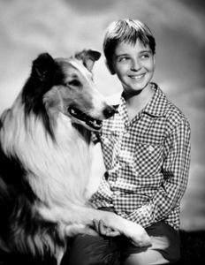 """Lassie""Tommy Rettig  & LassieC. 1954 CBSPhoto by Gabi Rona - Image 7553_0020"