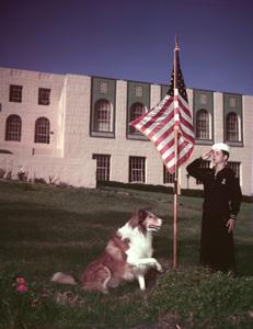 """Lassie""Lassiecirca 1962Photo by Gabi Rona - Image 7553_0055"