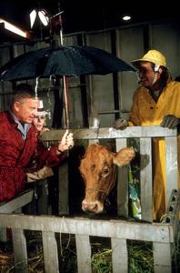 """""""Green Acres""""Eddie Albert, Eva Gabor, Tom Lester1965 CBS © 1978 Gene TrindlMPTV - Image 9271_0010"""