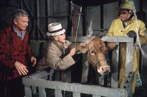 """""""Green Acres""""Eddie Albert, Eva Gabor, Tom Lester1965 CBS © 1978 Gene Trindl - Image 9271_0021"""