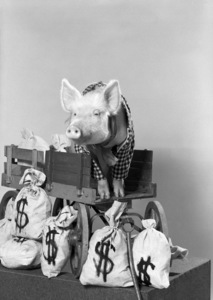 """Green Acres""Arnold the Pig1965 © 1978 John Engstead - Image 9271_0025"