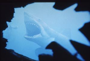 """""""Jaws"""" © 1975 UnivesalPhoto by Bud Gray - Image 9575_0011"""