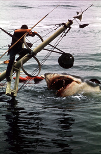 """Jaws""Roy Scheider1975 Universal Pictures - Image 9575_0050"